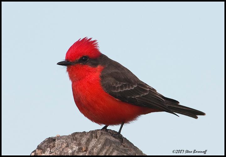 Names of Wild Birds The Name of The Bird